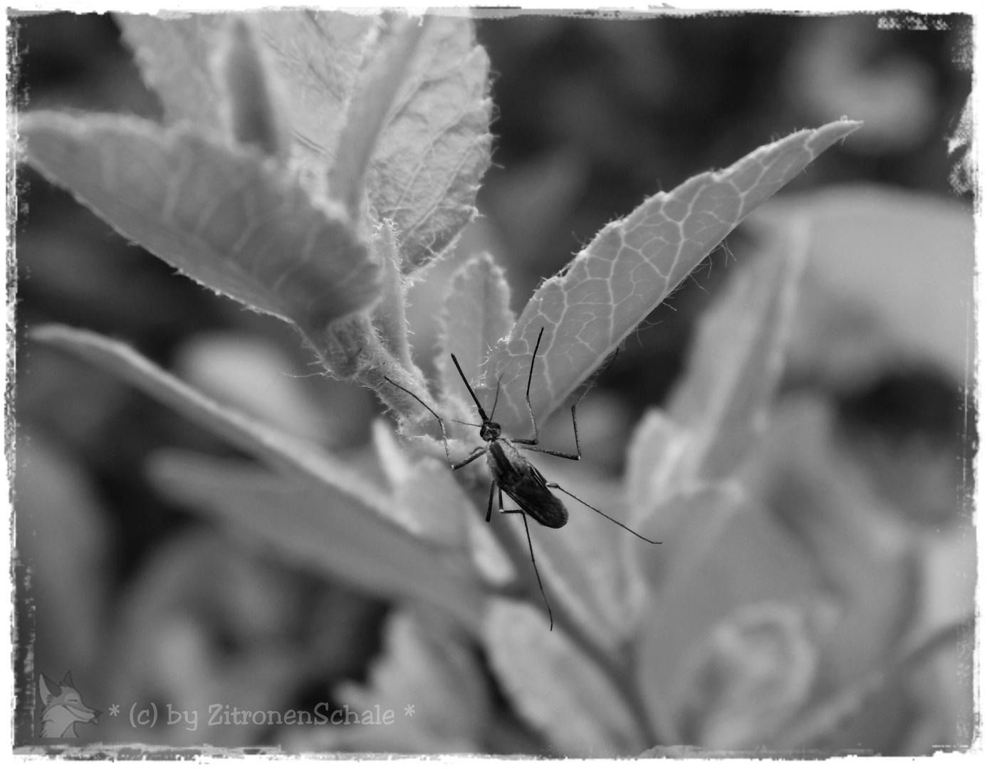 Mücke erwischt