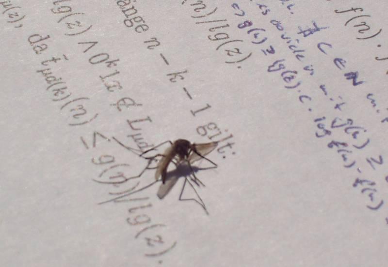 Mücke vor Theoretischer Informatik