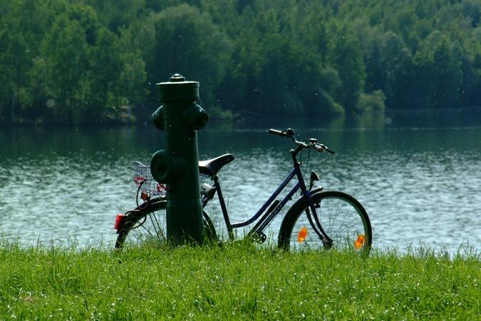 Mücken am See.
