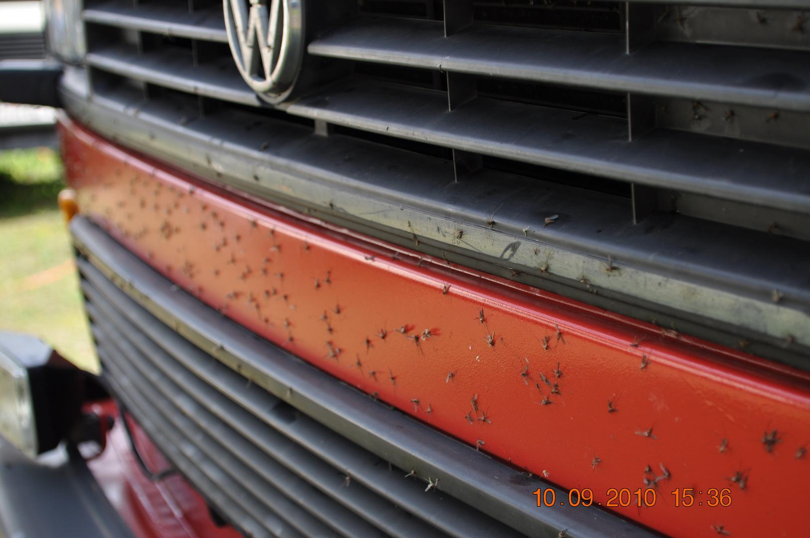 ... Mücken oder ein VW Bulli ist BREIT ;-)
