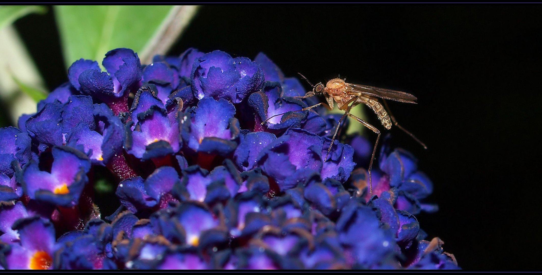Mückenmänner halten sich an Pflanzen...