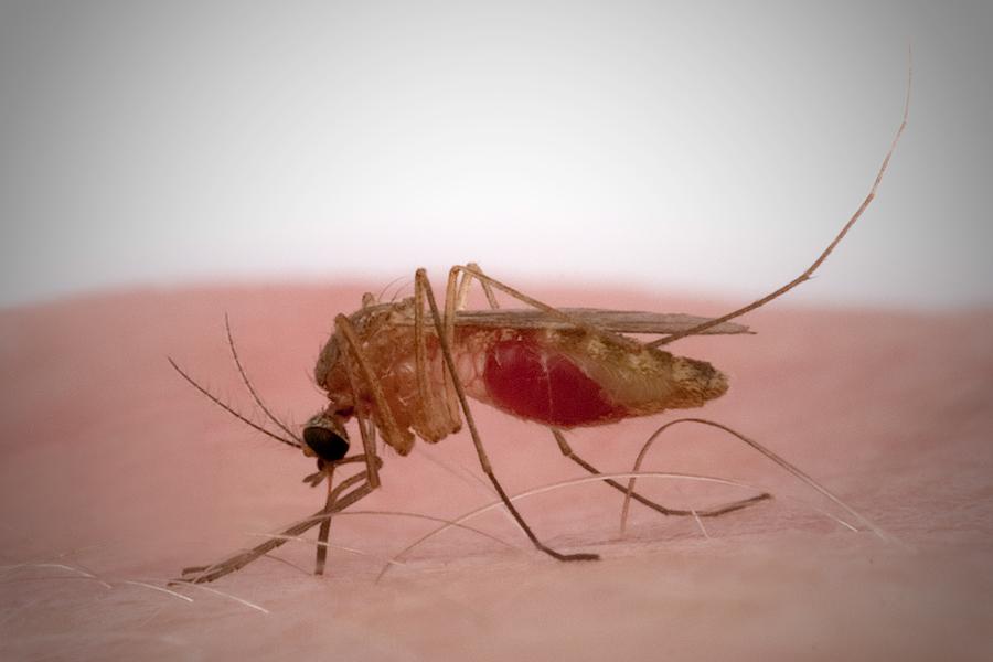 m ckenstich foto bild tiere wildlife insekten bilder auf fotocommunity. Black Bedroom Furniture Sets. Home Design Ideas