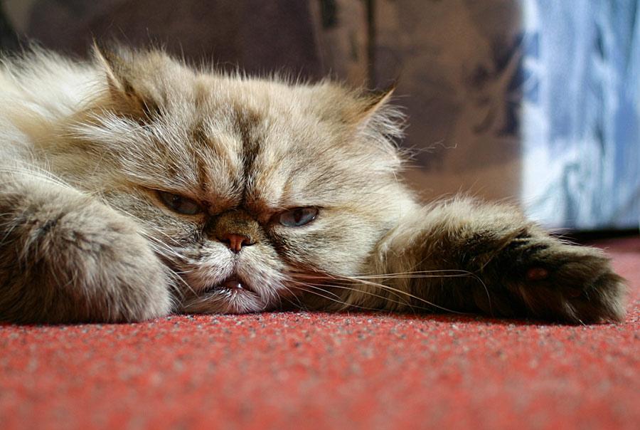 Müde....
