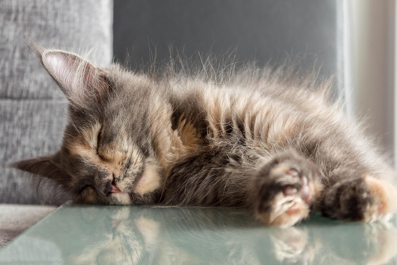 Müde bin ich geh zur Ruh....