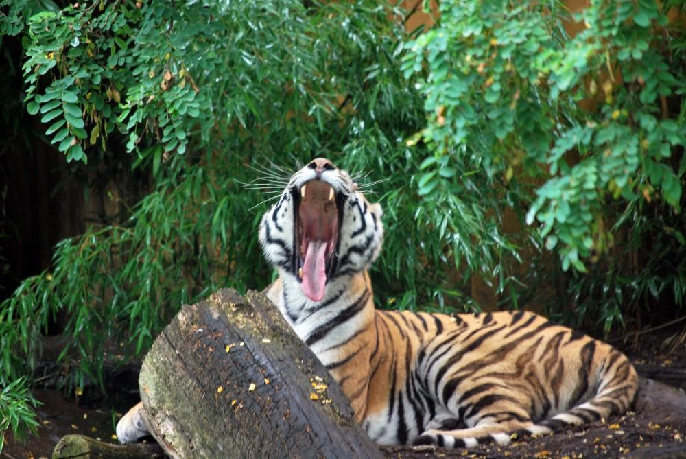 m de bin ich geh zur ruh foto bild tiere zoo wildpark falknerei s ugetiere. Black Bedroom Furniture Sets. Home Design Ideas