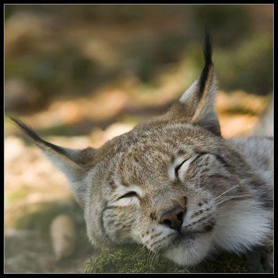 müde bin ich geh zur Ruh und ...