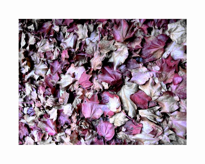 ...müde gewordene roza träume...