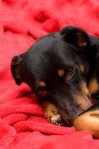 Müde Hunde nervt man nicht