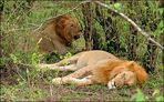 Müde Könige