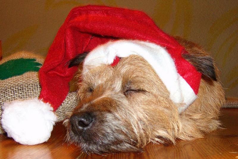müder weihnachtshund