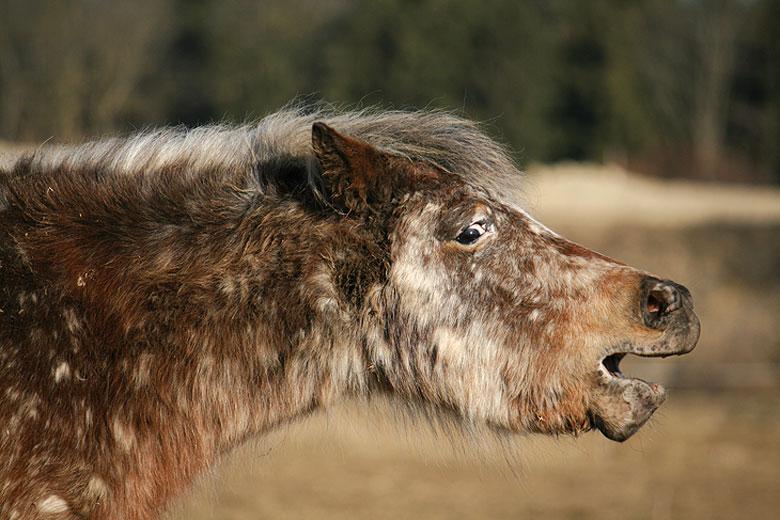 Müdes Pony in Tarnfarbe