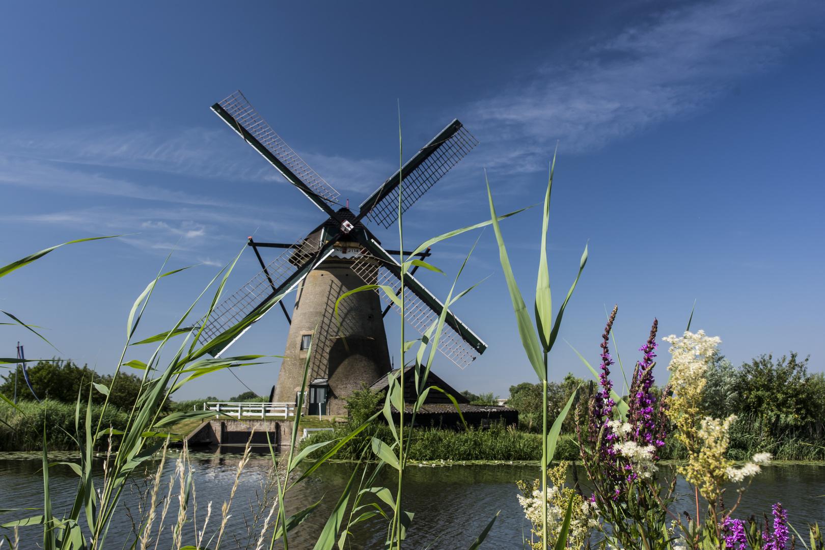 Mühle bei Kinderdijk