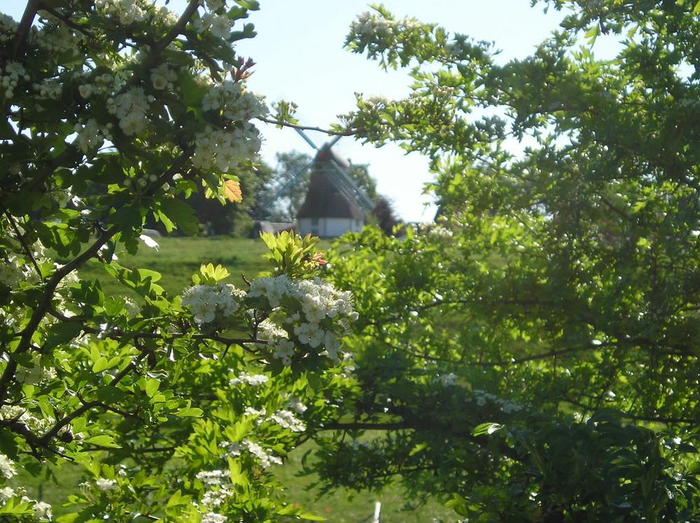 Mühle von Munkbrarup