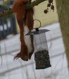 """"""" Mühsam nährt sich das Eichhörnchen! """""""