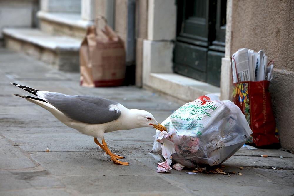 Müll sortiern..