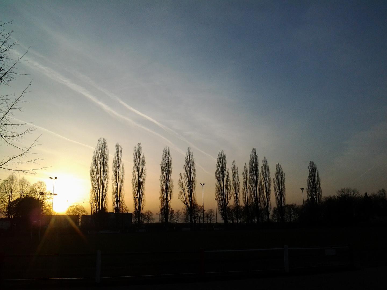München Ende März 2014 - Pappeln im Sonnenuntergang