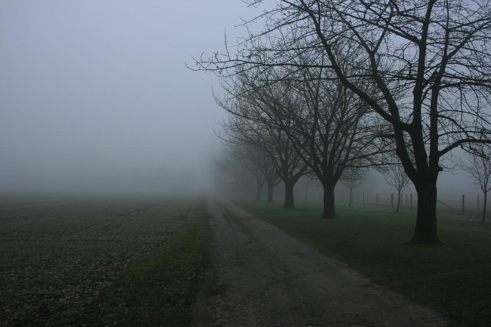 Münsterland im Nebel 01