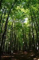 Müritz-Nationalpark Natur und Ruhe