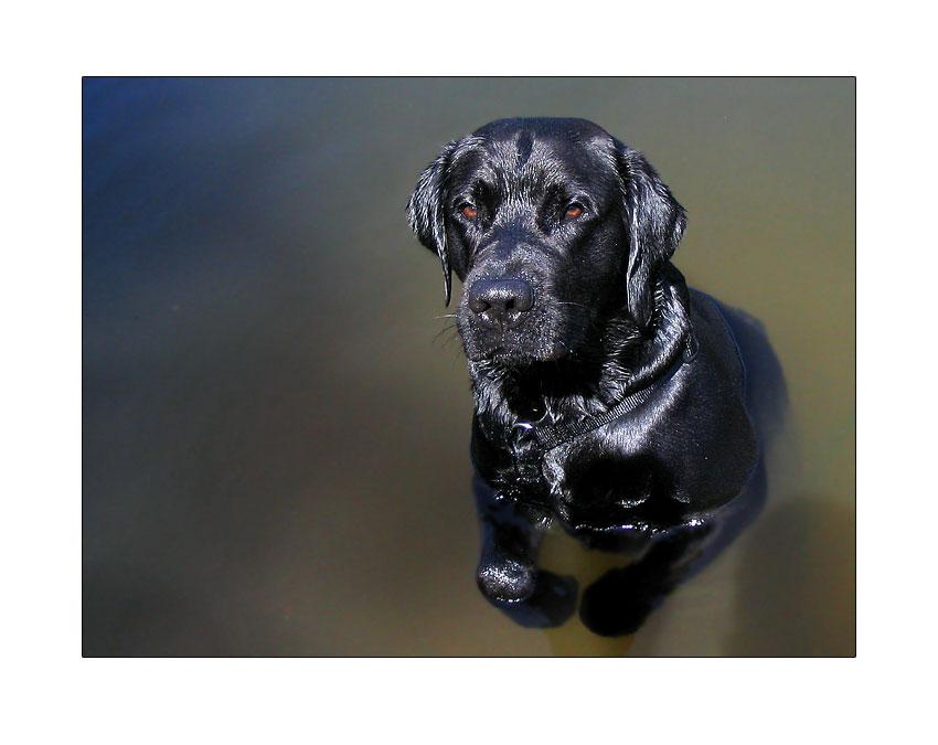 Mürrischer Hund in Wasser