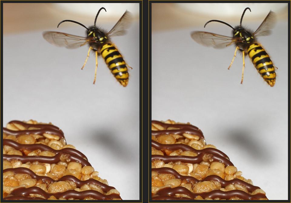 Müsli für Wespen [3D]