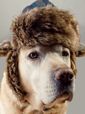 Mütze auf bei diesem Hundewetter