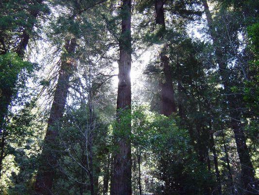 Muir Woods National Monument Park, California Redwoods