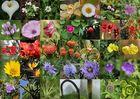 """Multi-Kulti""-Blumen auf Madeira"