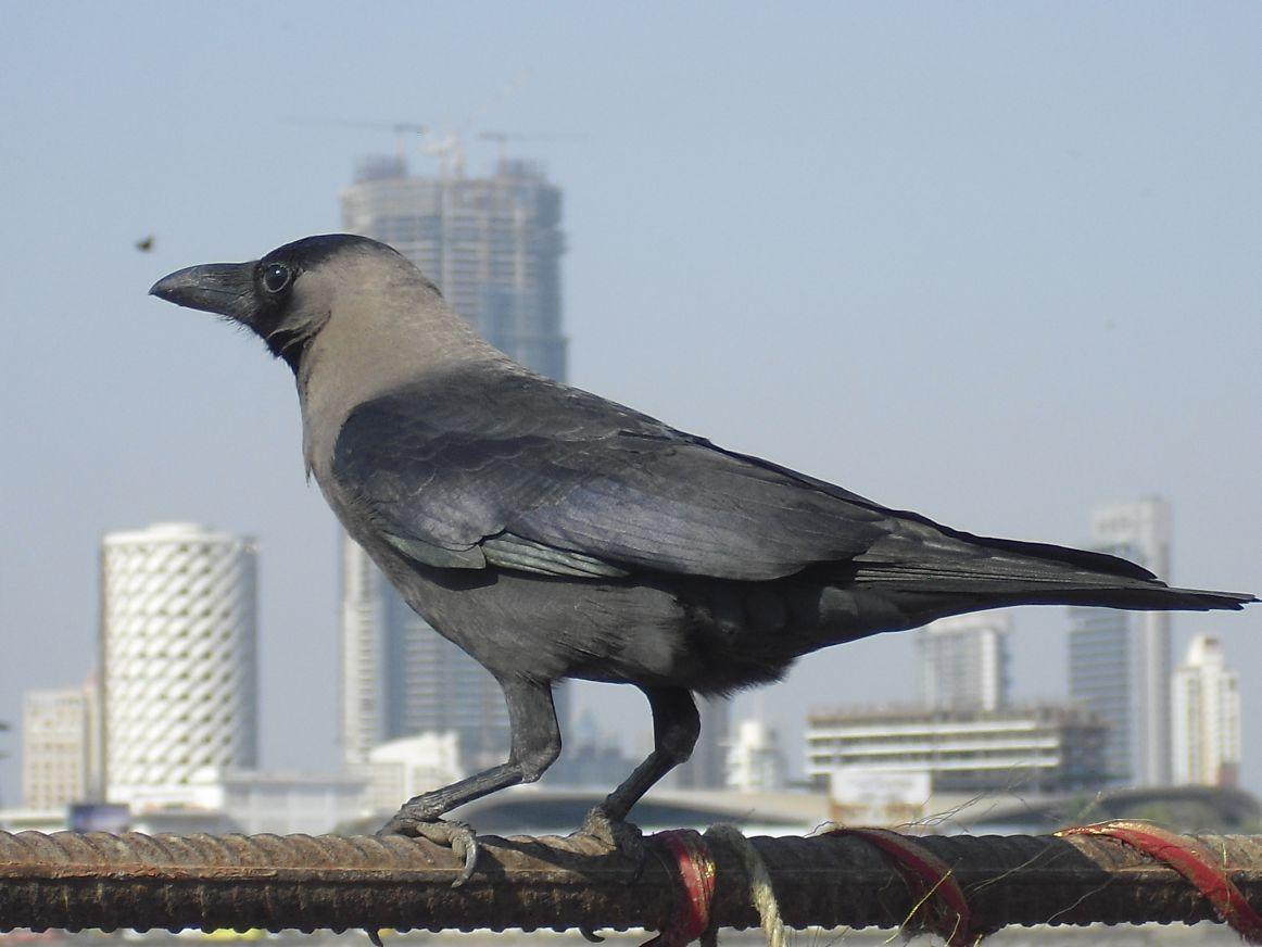 mumbai hier bin ich zuhause