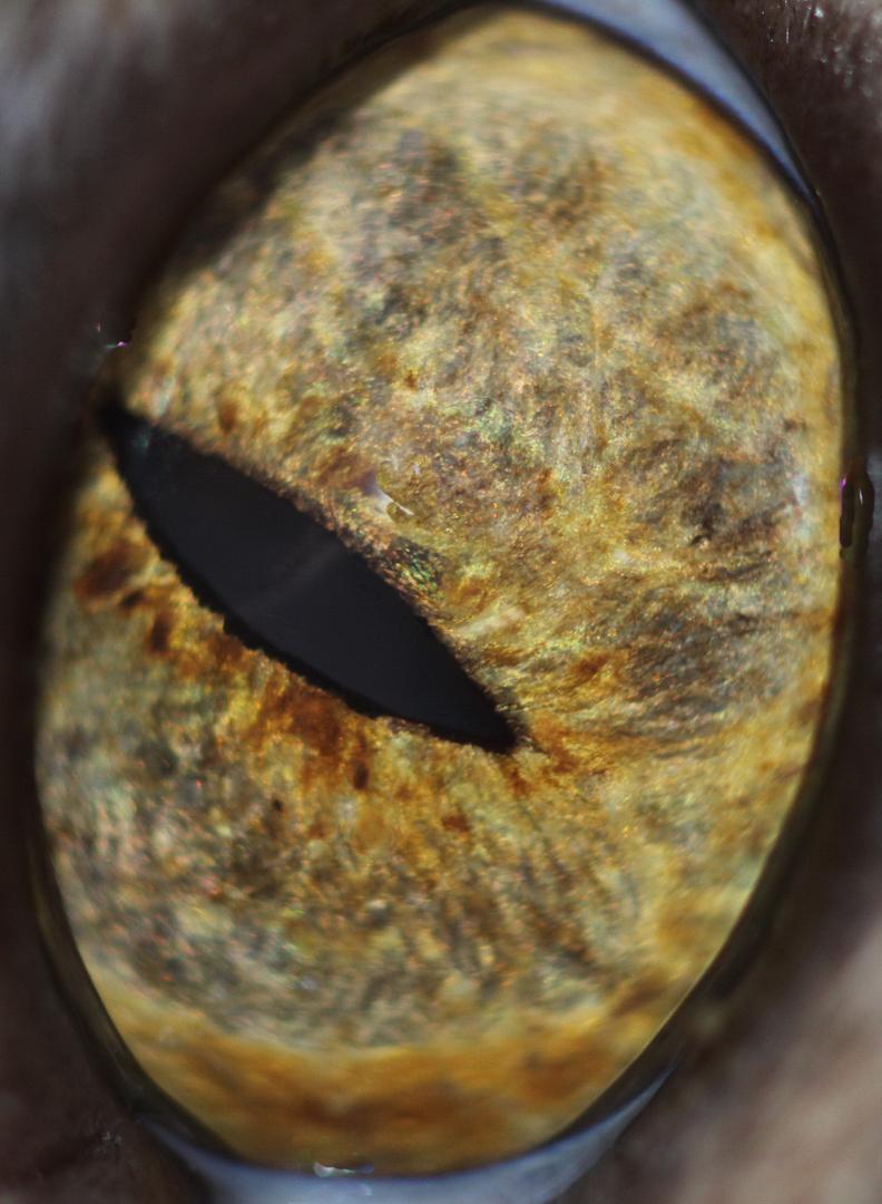 Munjecas linkes Auge