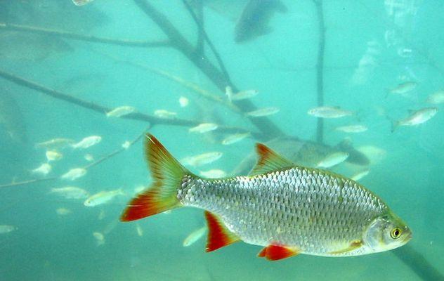 Munter wie ein Fisch im Wasser
