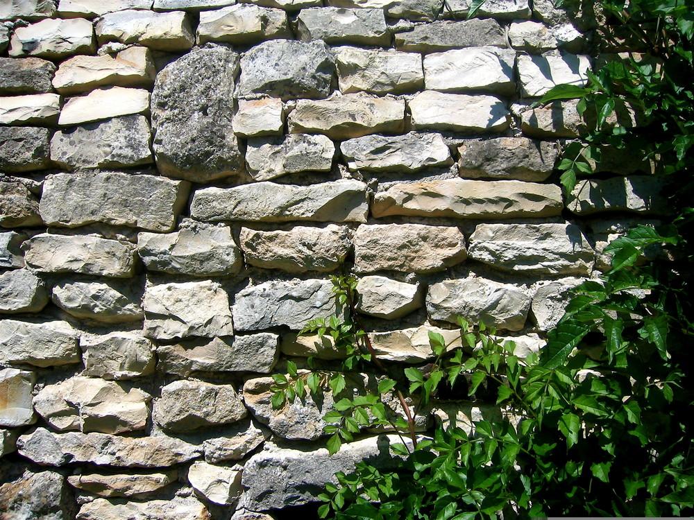 mur pierre et végétation