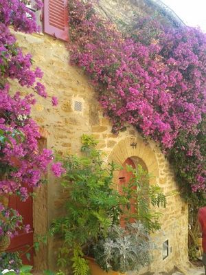 muraille de fleurs