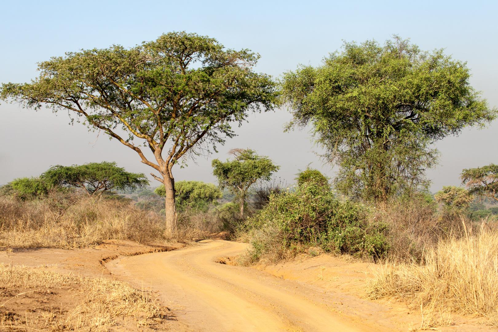Murchison NP