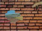 muro, lagartija de campo
