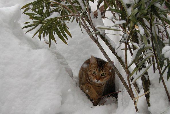 Murphy und Schneefall im Ticino....