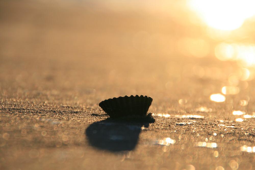 Muschel im Abendlicht der Sonne