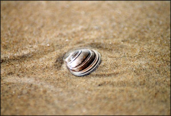 muschel im sand, in holland am strand :o)