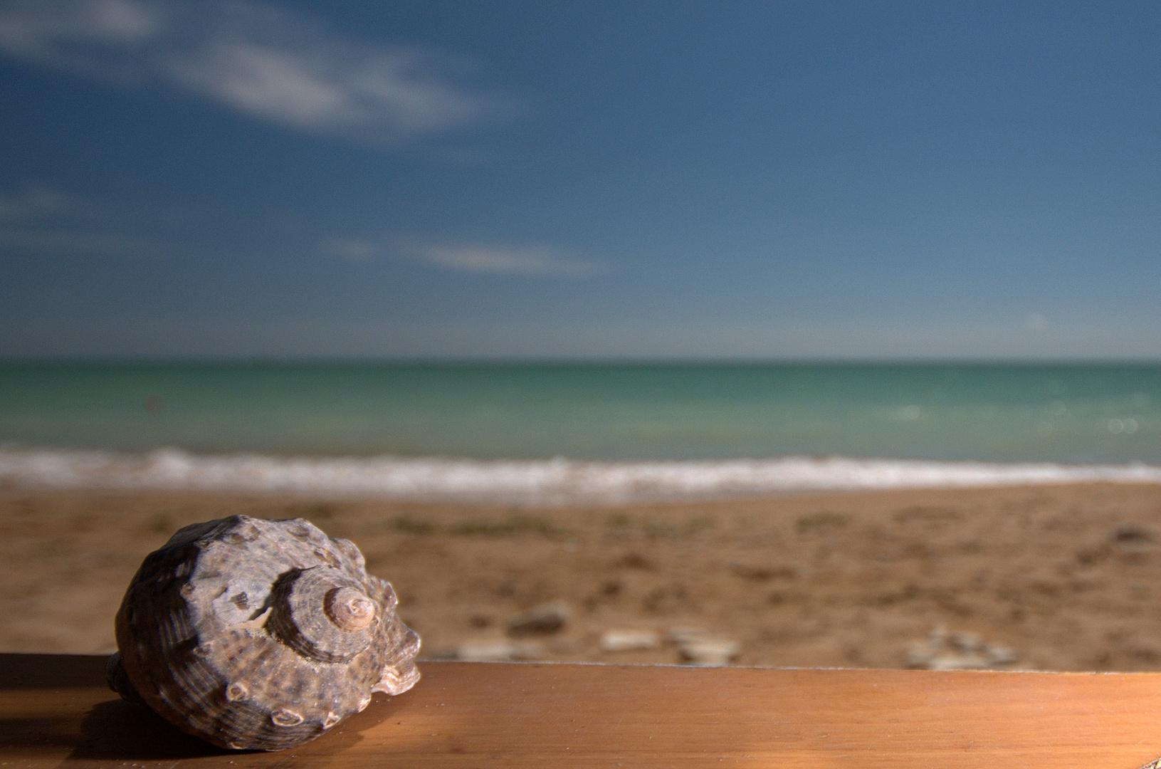 Muschel vom Schwarzen Meer