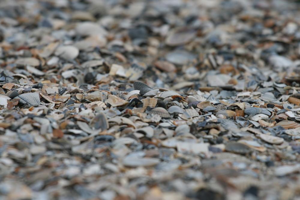 Muscheln am Strand