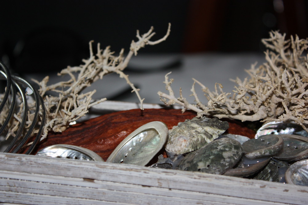 Muscheln auf dem Tisch. Spektakulär :-)