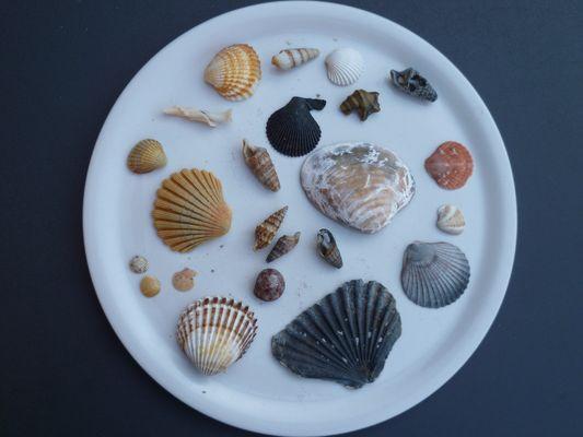 Muscheln auf Teller ohne Sand oder Wasser
