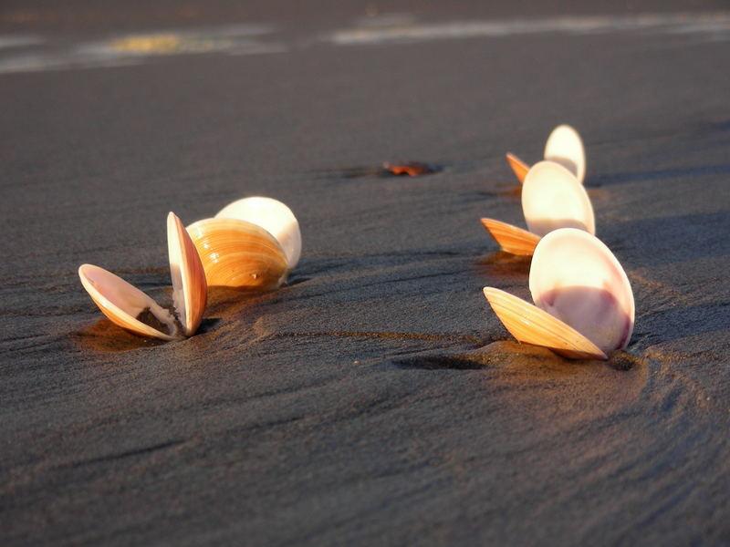 Muscheln im Abendlicht