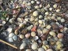 Muscheln im Meer