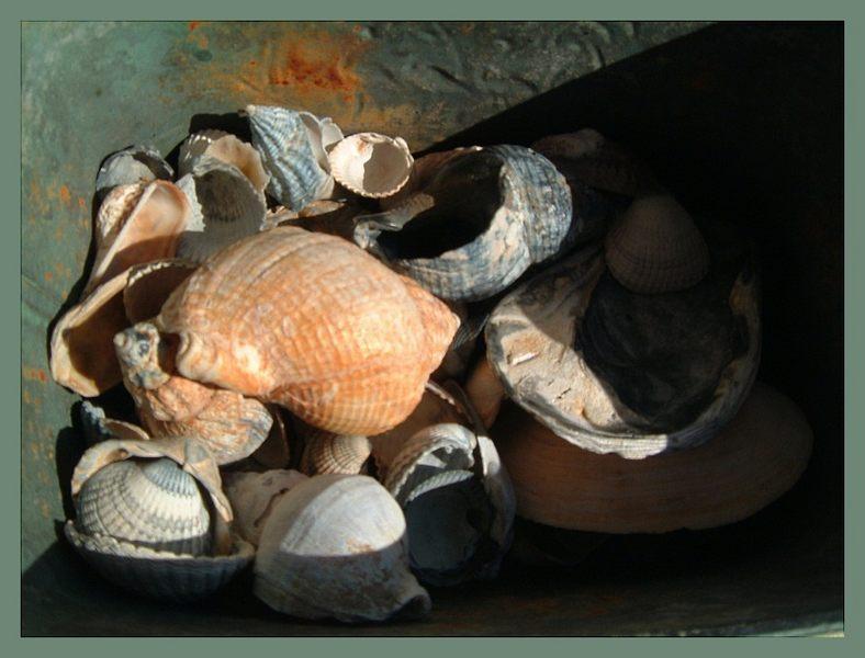 Muscheln, letzter Versuch