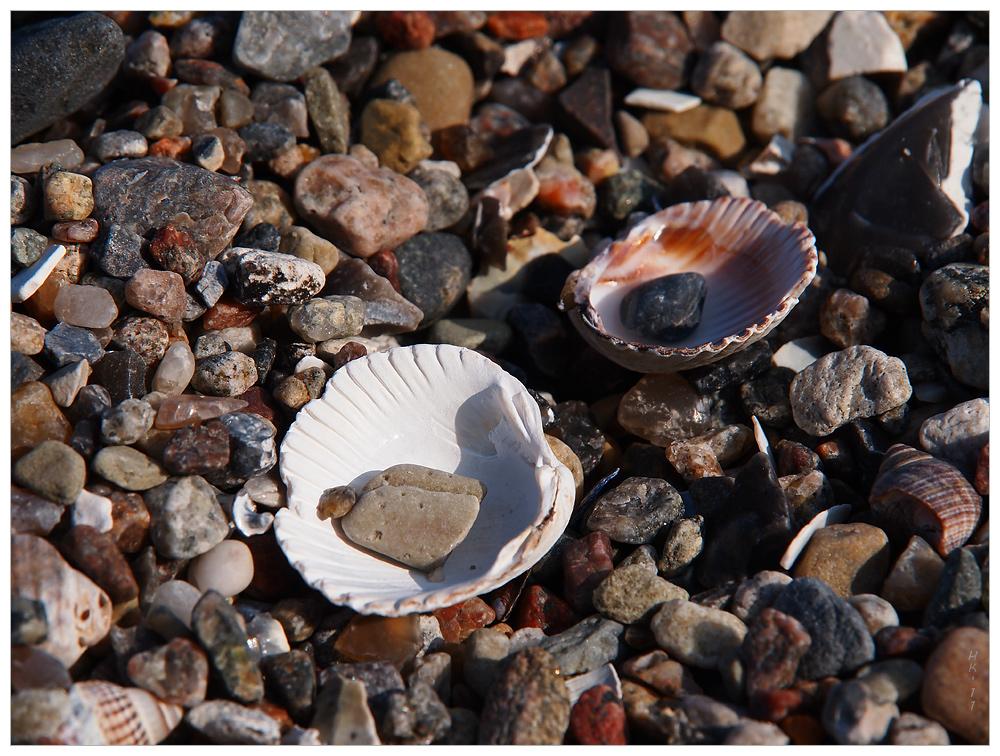 Muscheln mit Stein