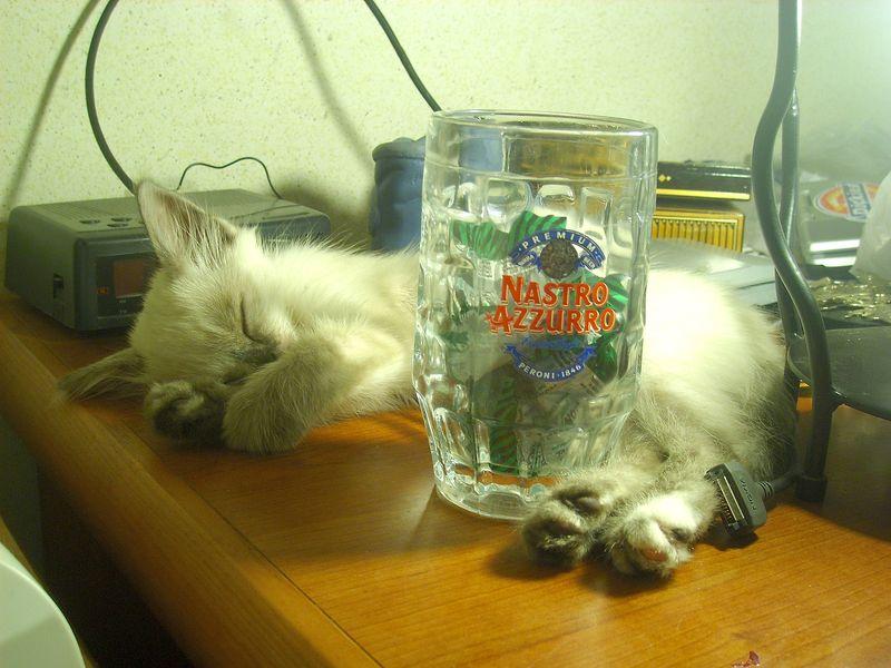 musetta dopo la sbronza