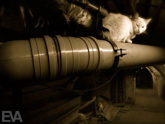 Museumswächter auf Samtpfoten - Die Eremitage hält eine Hundertschaft Katzen in ihren Kellern