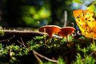 Mushroom season has started