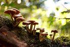 Mushroom season started 2
