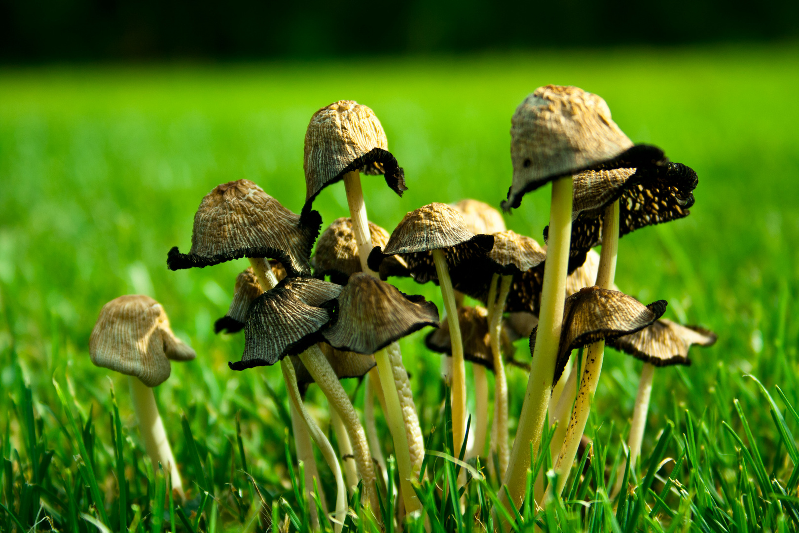 Mushroomfamily
